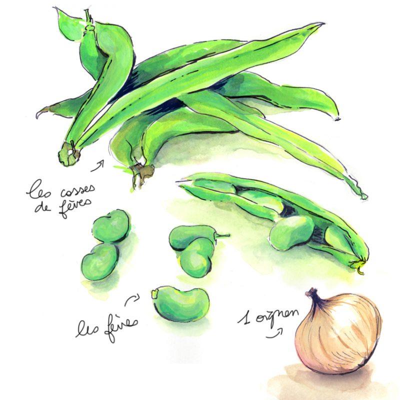illustration de cosses de fèves, fèves et oignon réalisée par Paludana