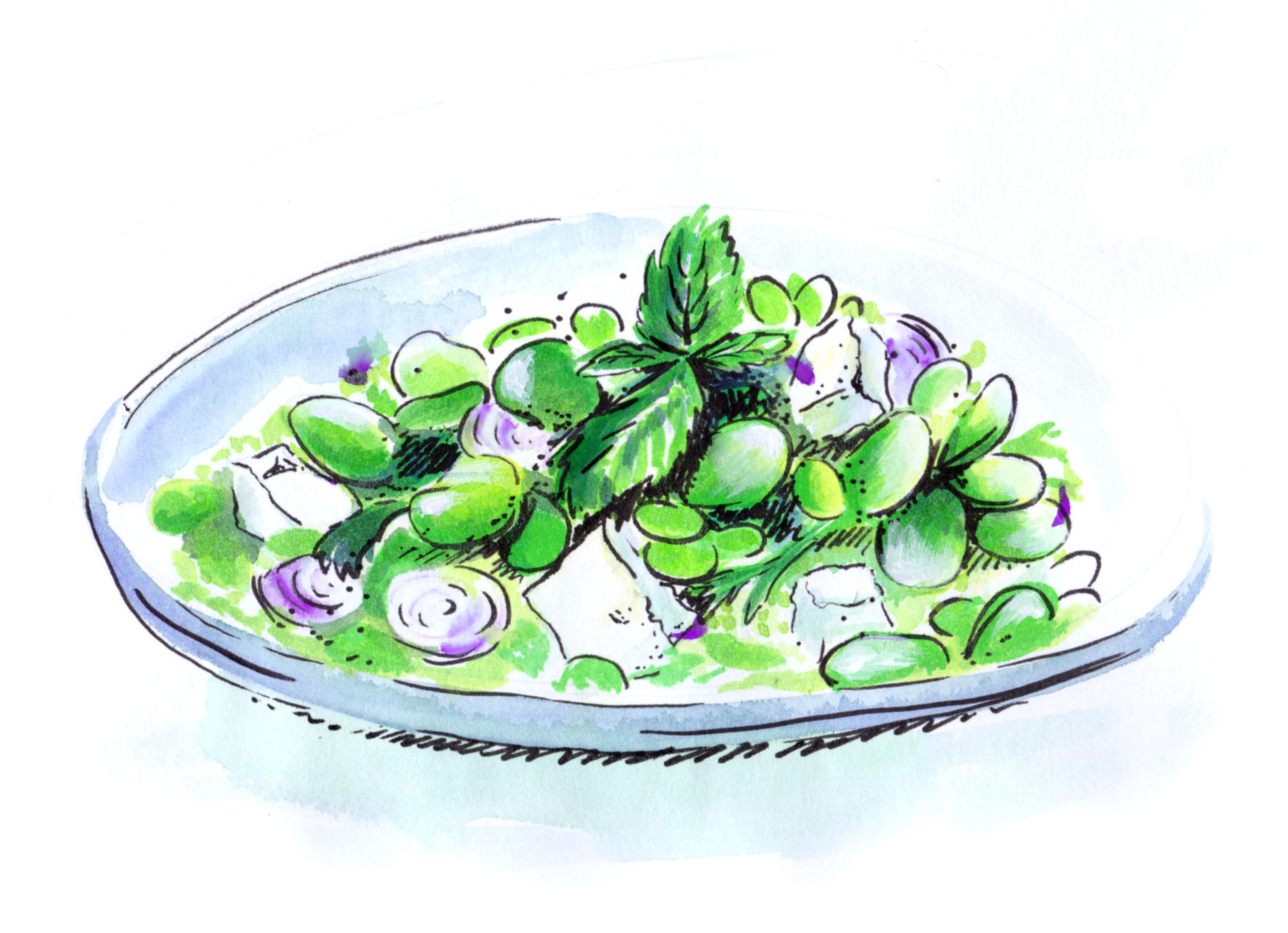 illustration de salade de fèves réalisée par Paludana